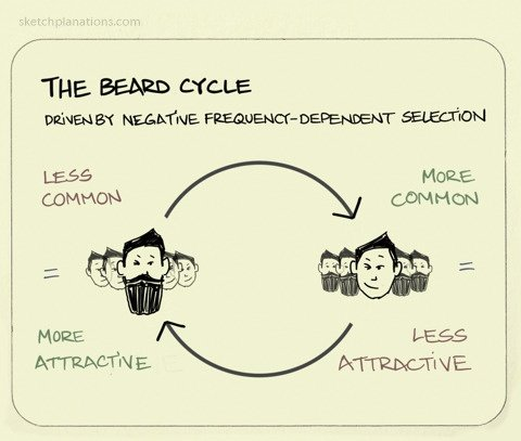 a complex visual representation of beards becoming more popular when they are rare and vice versa when they are popular